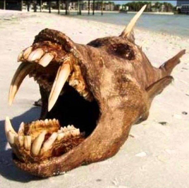 Weird Fish After Tsunami 2011 5