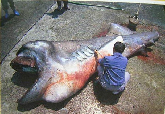 Weird Fish After Tsunami 2011 3