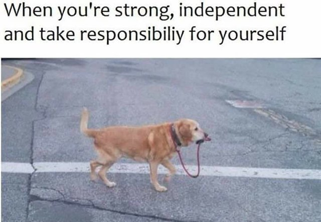 1500488177_resp 24 funny dog memes that will surely make your day better